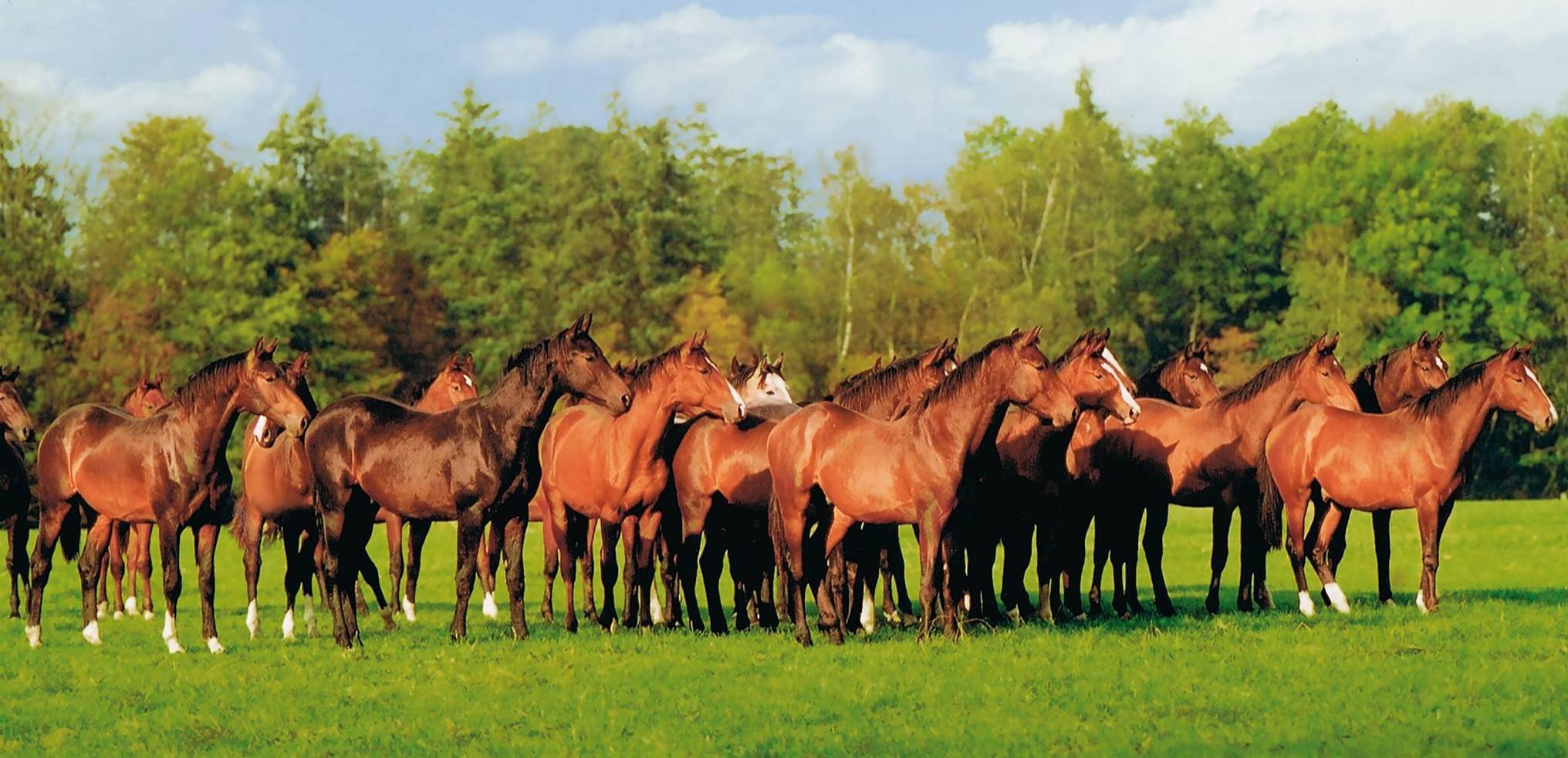 Evert Brooijmans paarden paardenkudde kudde