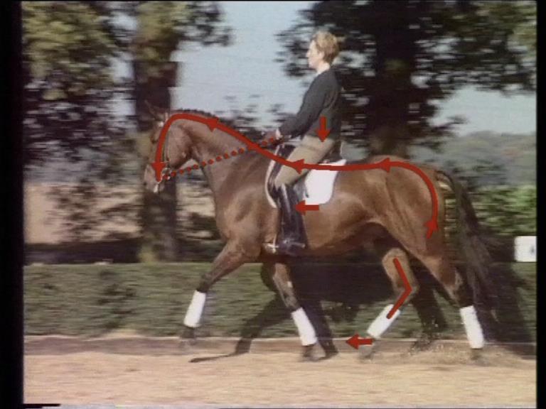 Evert Brooijmans quality dressage equitotaal paardenmuesli