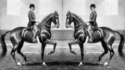Paardenmuesli Dressage Equitotaal Zadels